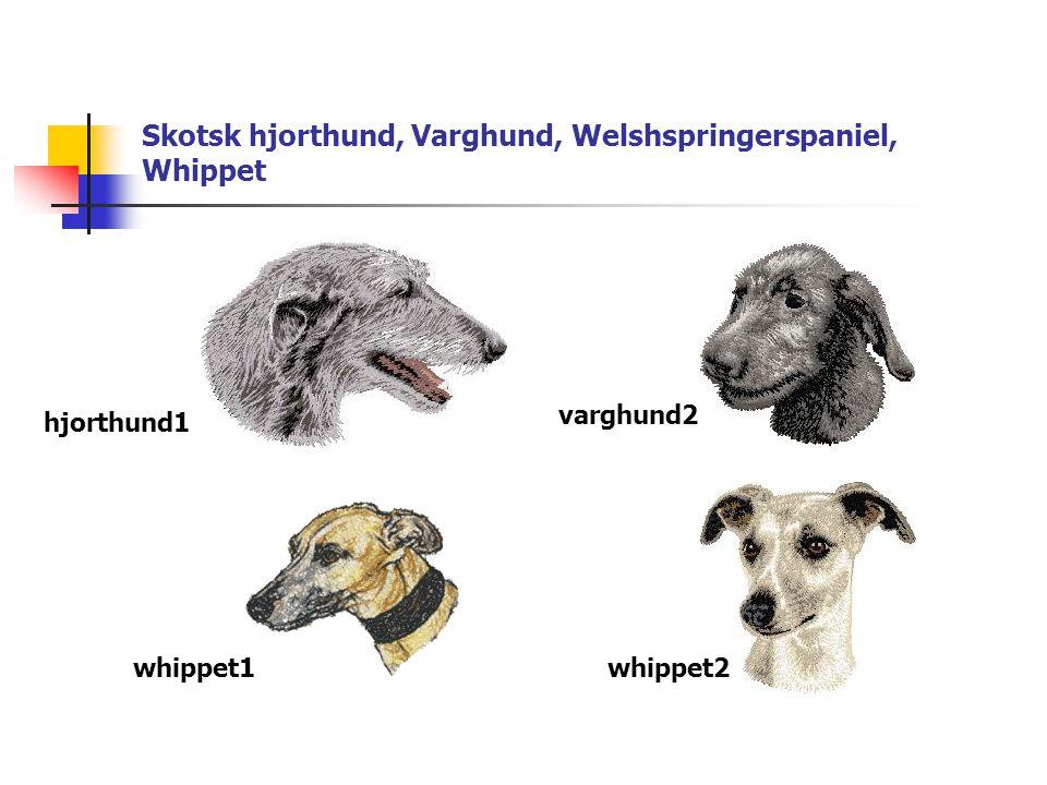 Skotsk hjorthund, Varghund, Welshspringerspaniel, Whippet hjorthund1 varghund2 whippet1whippet2