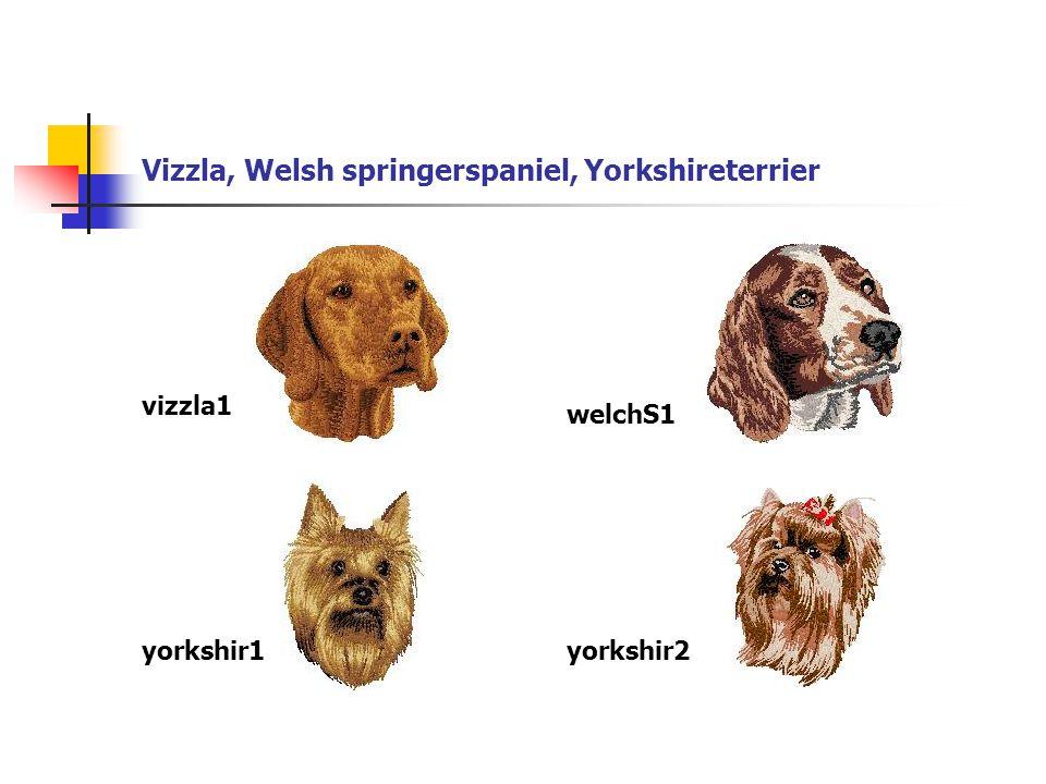 Vizzla, Welsh springerspaniel, Yorkshireterrier vizzla1 welchS1 yorkshir1yorkshir2