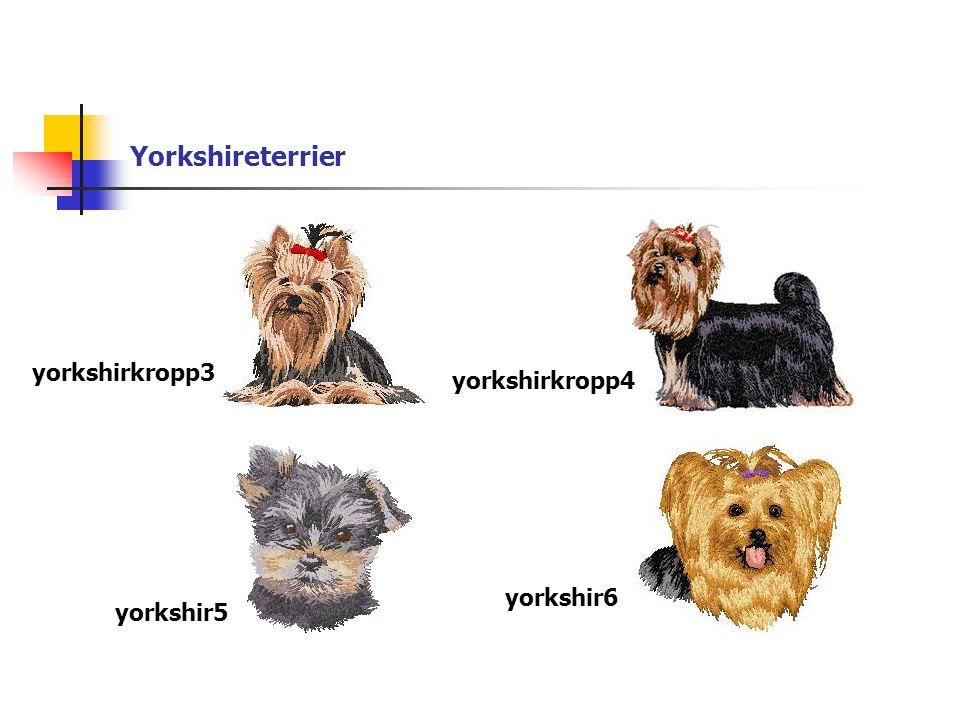 Yorkshireterrier yorkshirkropp3 yorkshirkropp4 yorkshir5 yorkshir6