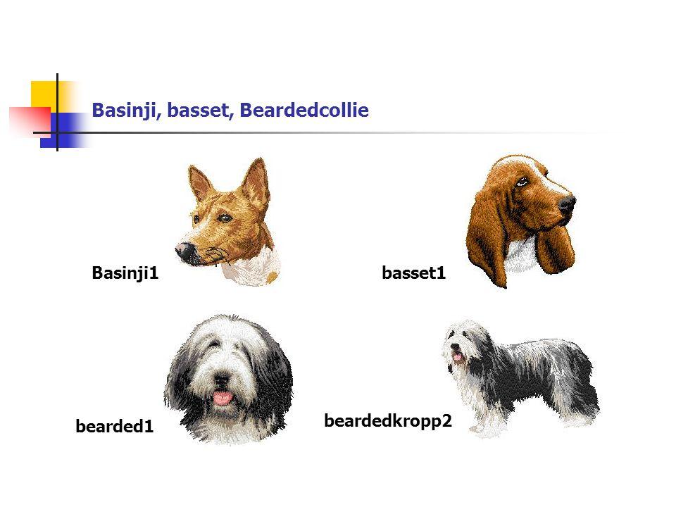 Basinji, basset, Beardedcollie Basinji1basset1 bearded1 beardedkropp2