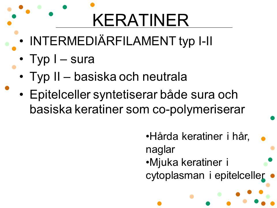 KERATINER INTERMEDIÄRFILAMENT typ I-II Typ I – sura Typ II – basiska och neutrala Epitelceller syntetiserar både sura och basiska keratiner som co-pol
