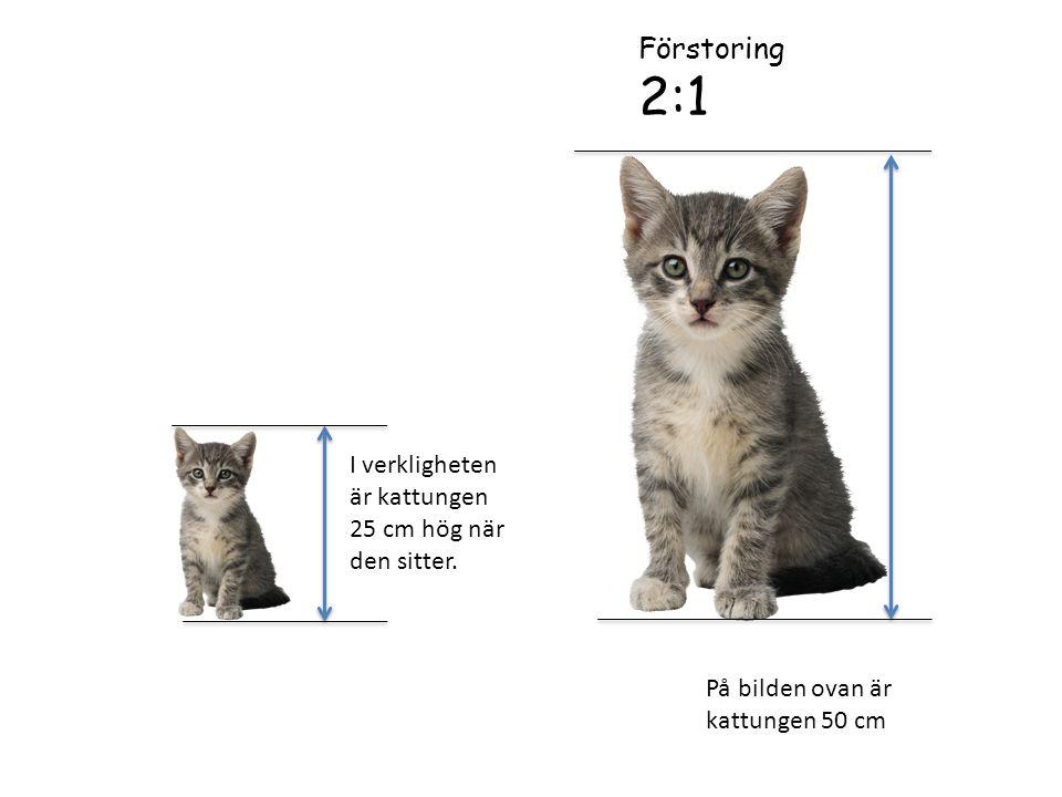 I verkligheten är kattungen 25 cm hög när den sitter.