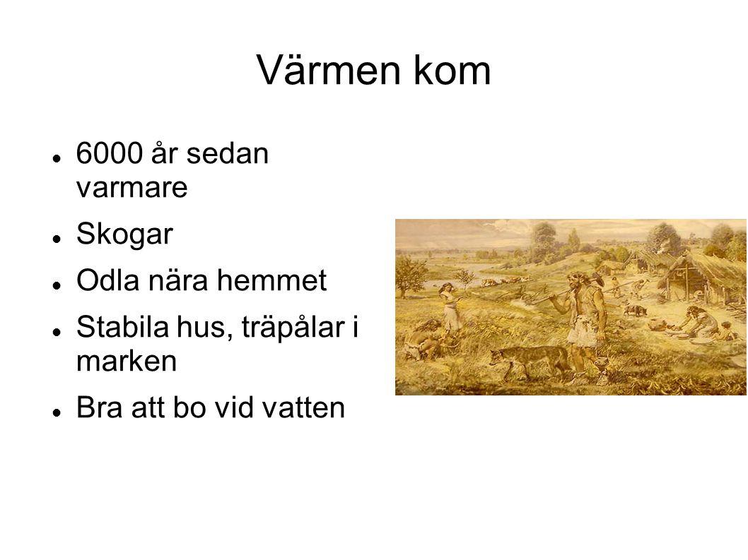 6000 år sedan varmare Skogar Odla nära hemmet Stabila hus, träpålar i marken Bra att bo vid vatten Värmen kom