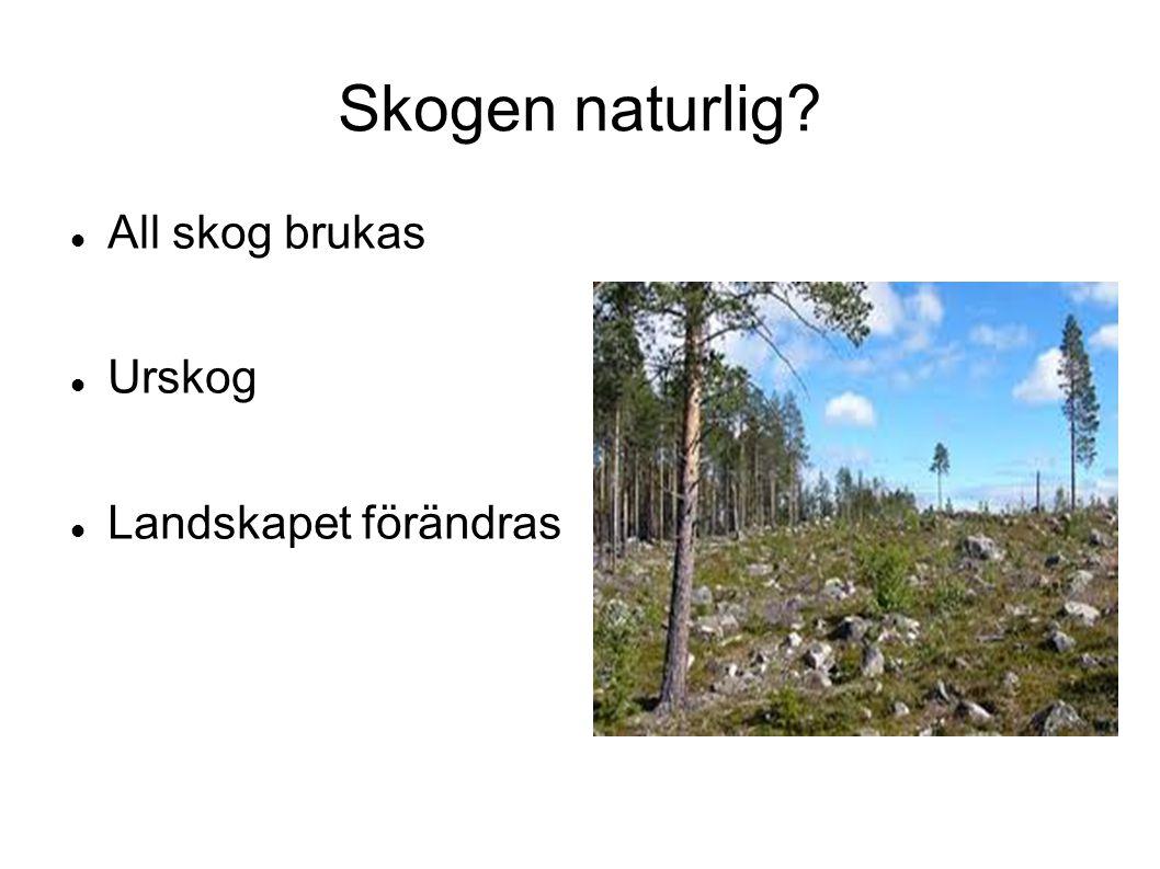 Skogen naturlig? All skog brukas Urskog Landskapet förändras