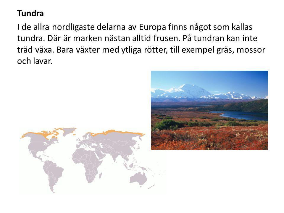 Tundra I de allra nordligaste delarna av Europa finns något som kallas tundra. Där är marken nästan alltid frusen. På tundran kan inte träd växa. Bara