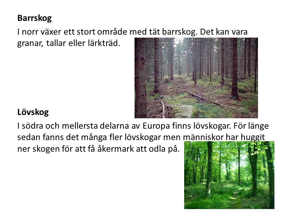 Barrskog I norr växer ett stort område med tät barrskog. Det kan vara granar, tallar eller lärkträd. Lövskog I södra och mellersta delarna av Europa f