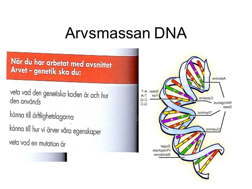 Arvsmassan DNA