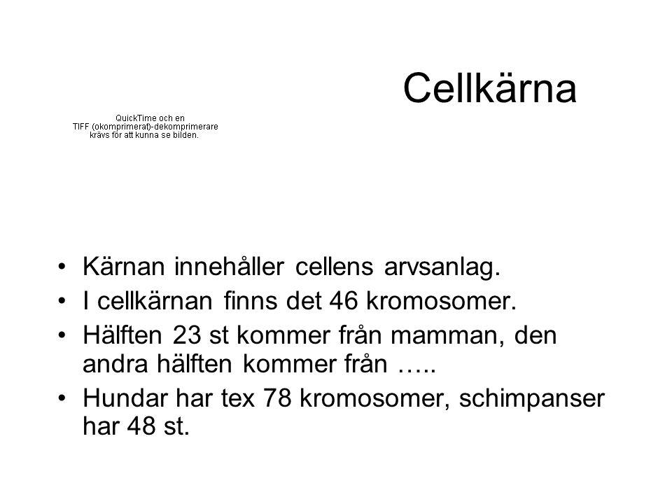 Cellkärna Kärnan innehåller cellens arvsanlag. I cellkärnan finns det 46 kromosomer. Hälften 23 st kommer från mamman, den andra hälften kommer från …