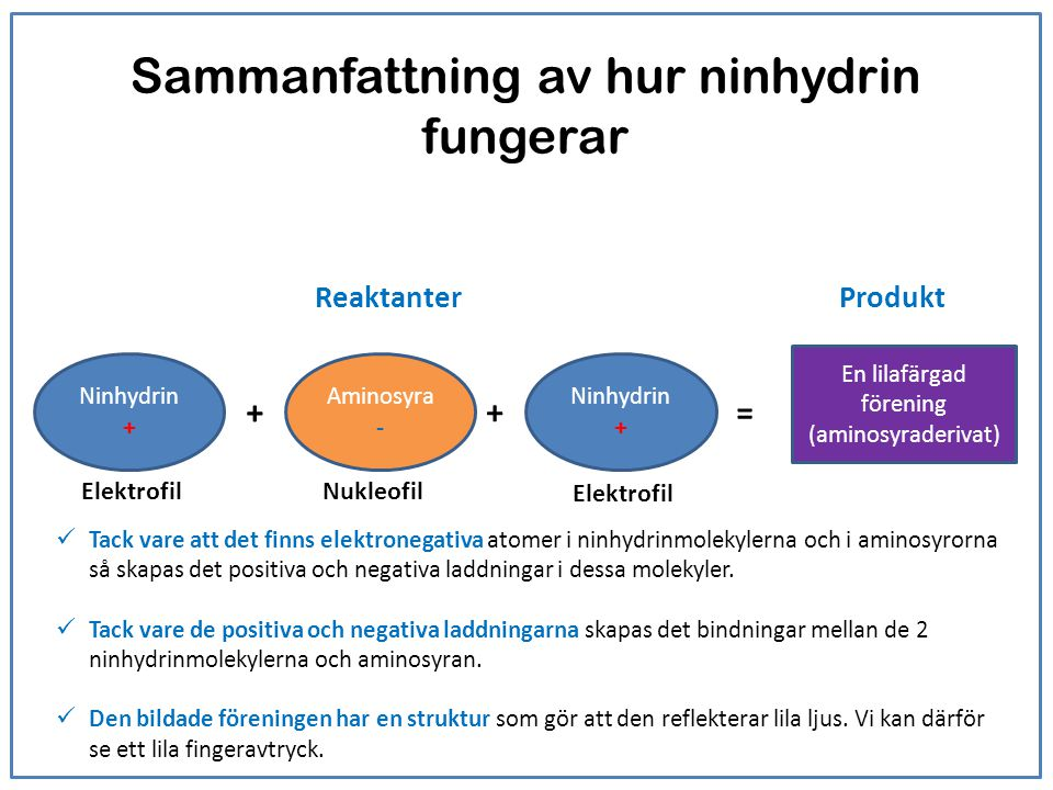 Sammanfattning av hur ninhydrin fungerar Ninhydrin + En lilafärgad förening (aminosyraderivat) + + Ninhydrin + = Aminosyra - Tack vare att det finns e