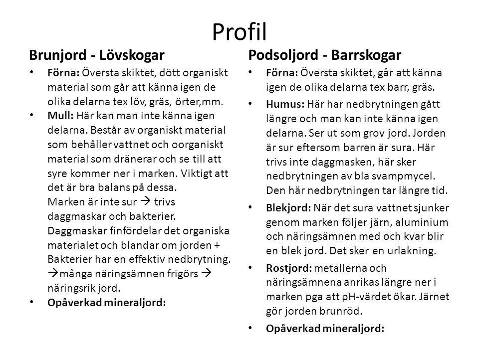 Profil Brunjord - Lövskogar Förna: Översta skiktet, dött organiskt material som går att känna igen de olika delarna tex löv, gräs, örter,mm.e Mull: Hä