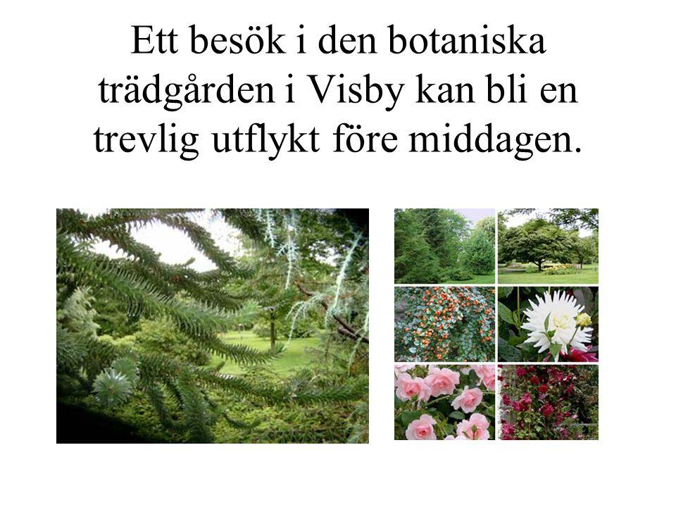 Ett besök i den botaniska trädgården i Visby kan bli en trevlig utflykt före middagen.