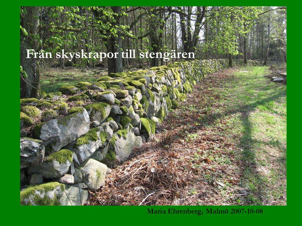 Från skyskrapor till stengären Maria Ehrenberg, Malmö 2007-10-08