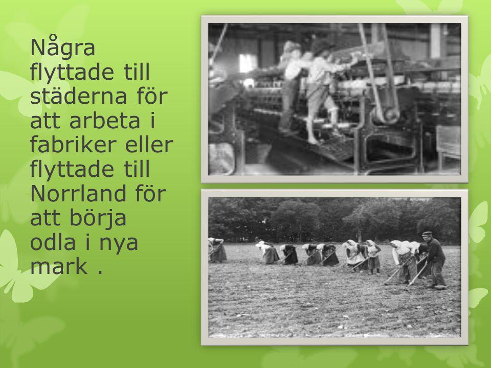 Några flyttade till städerna för att arbeta i fabriker eller flyttade till Norrland för att börja odla i nya mark.