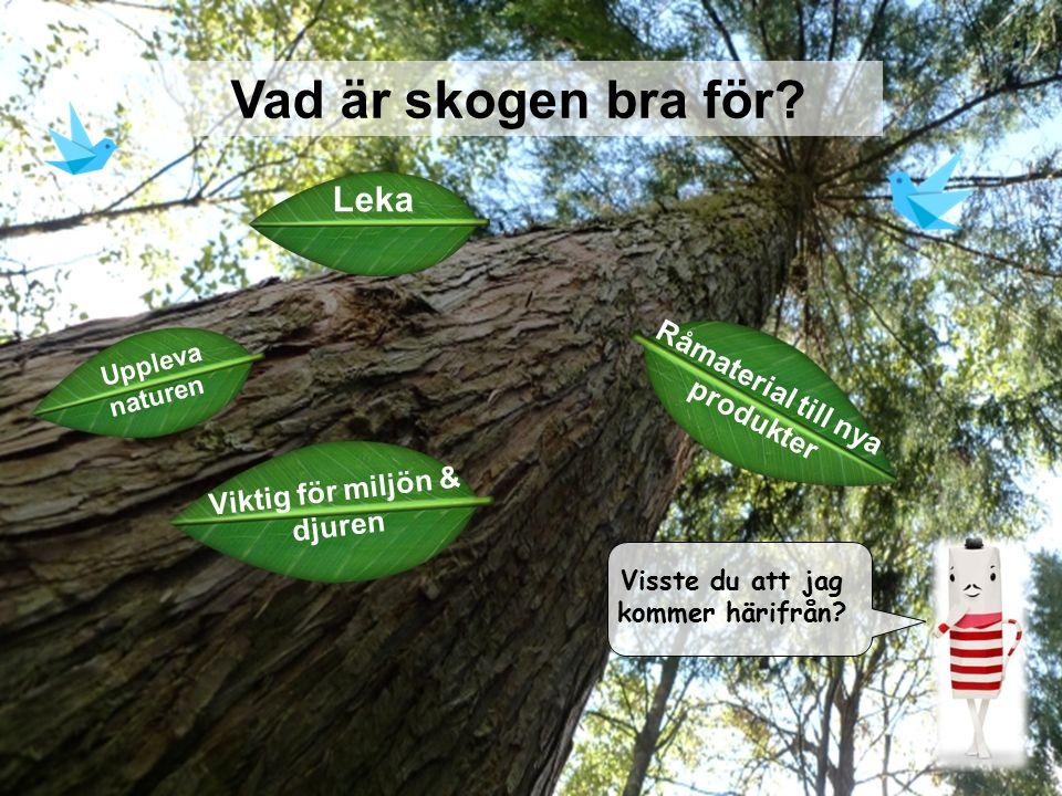 / 3 Vad är skogen bra för? Visste du att jag kommer härifrån? Uppleva naturen Råmaterial till nya produkter Leka Viktig för miljön & djuren