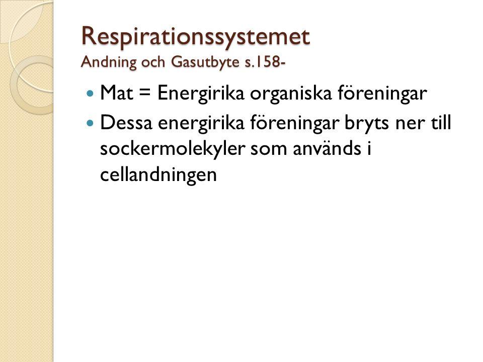 Respirationssystemet Andning och Gasutbyte s.158- Mat = Energirika organiska föreningar Dessa energirika föreningar bryts ner till sockermolekyler som