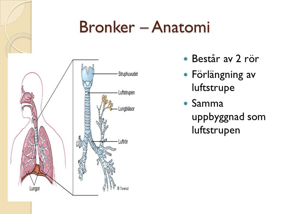 Bronker – Anatomi Består av 2 rör Förlängning av luftstrupe Samma uppbyggnad som luftstrupen