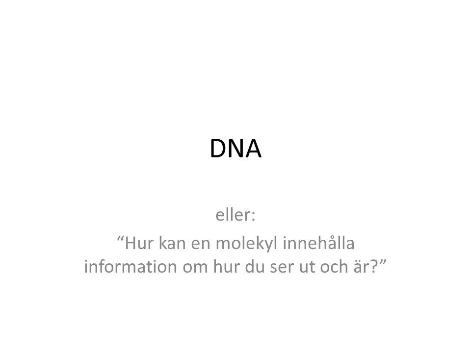 """DNA eller: """"Hur kan en molekyl innehålla information om hur du ser ut och är?"""""""