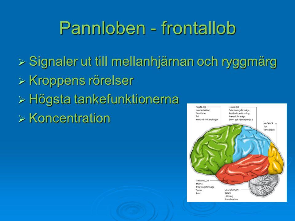 Pannloben - frontallob  Signaler ut till mellanhjärnan och ryggmärg  Kroppens rörelser  Högsta tankefunktionerna  Koncentration