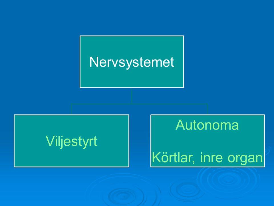 Autonoma nervsystemet  Sympatiska Aktiveras vid stress och gör kroppen beredd för att hantera utmaningar Ex.