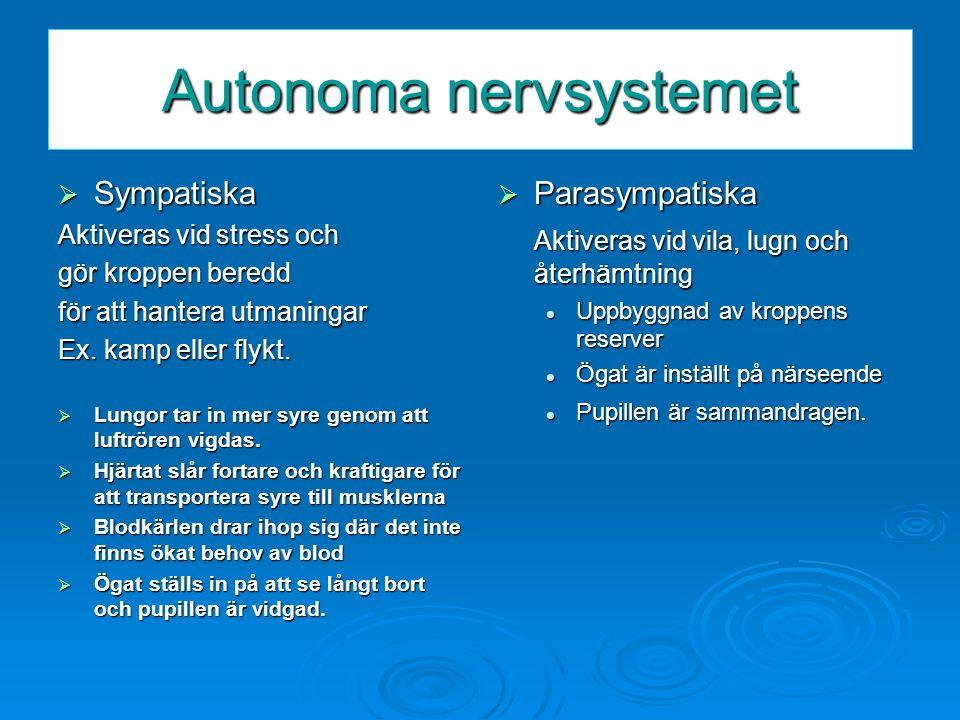 Autonoma nervsystemet  Sympatiska Aktiveras vid stress och gör kroppen beredd för att hantera utmaningar Ex. kamp eller flykt.  Lungor tar in mer sy