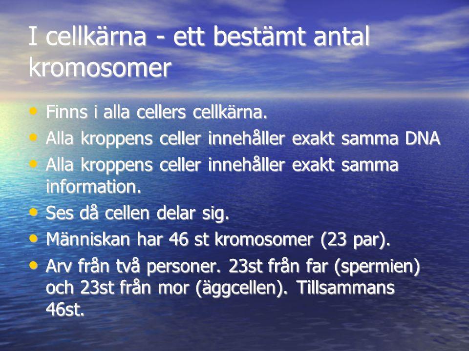 I cellkärna - ett bestämt antal kromosomer Finns i alla cellers cellkärna. Finns i alla cellers cellkärna. Alla kroppens celler innehåller exakt samma