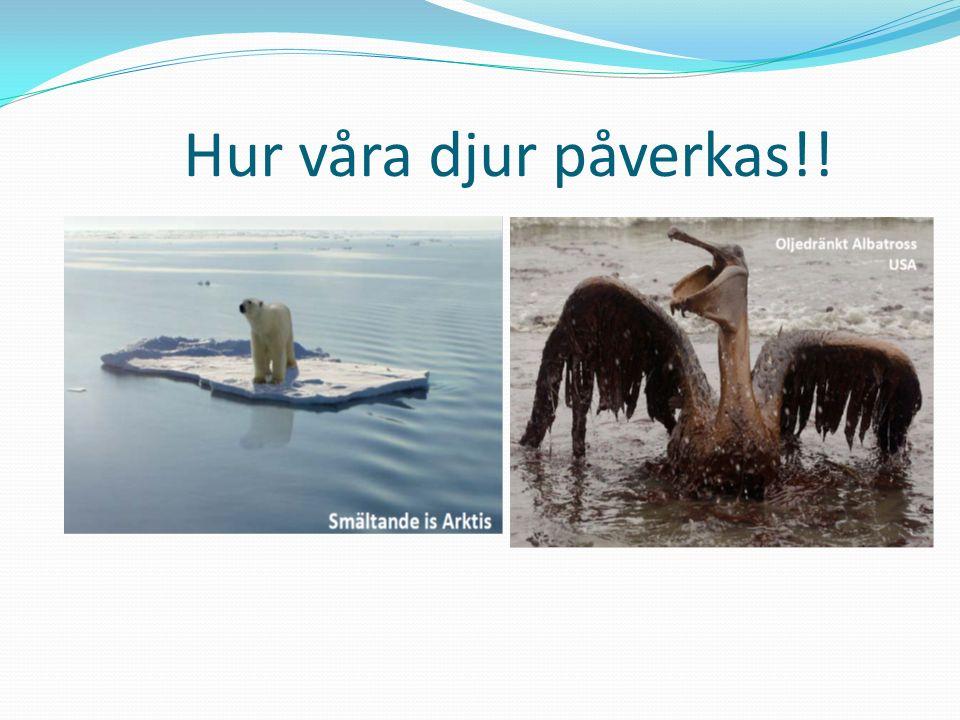 Hur våra djur påverkas!!