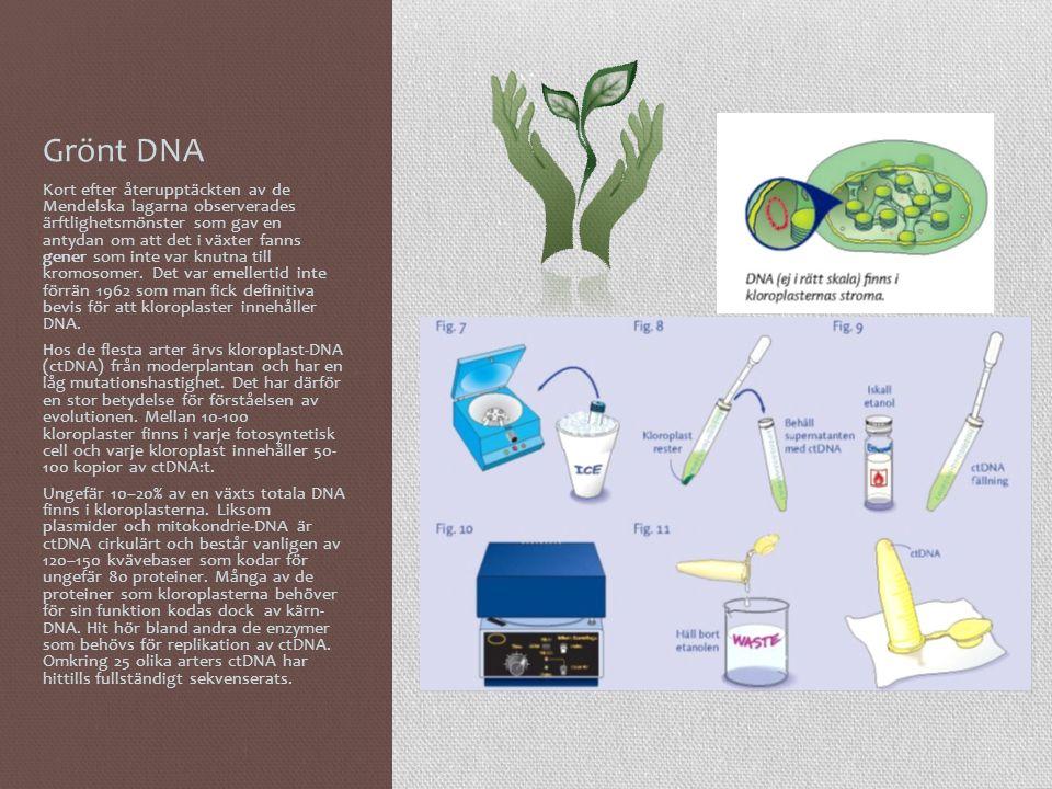 Grönt DNA Kort efter återupptäckten av de Mendelska lagarna observerades ärftlighetsmönster som gav en antydan om att det i växter fanns gener som int