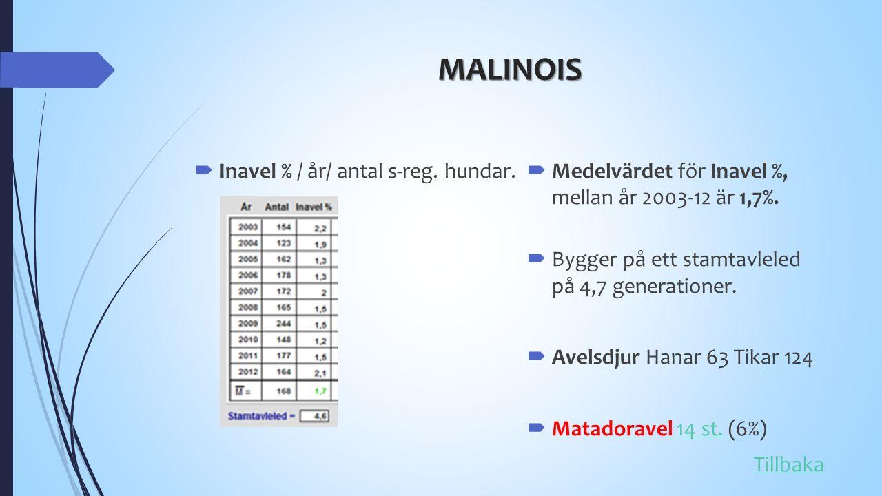 MALINOIS  Inavel % / år/ antal s-reg. hundar.