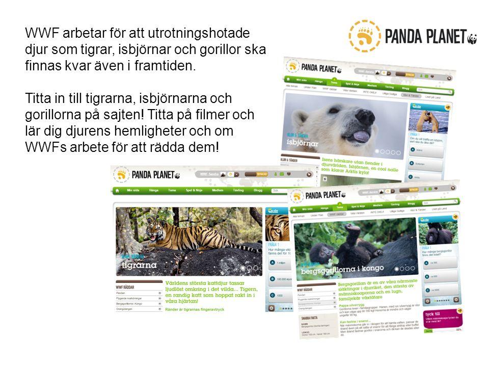 WWF arbetar för att utrotningshotade djur som tigrar, isbjörnar och gorillor ska finnas kvar även i framtiden.