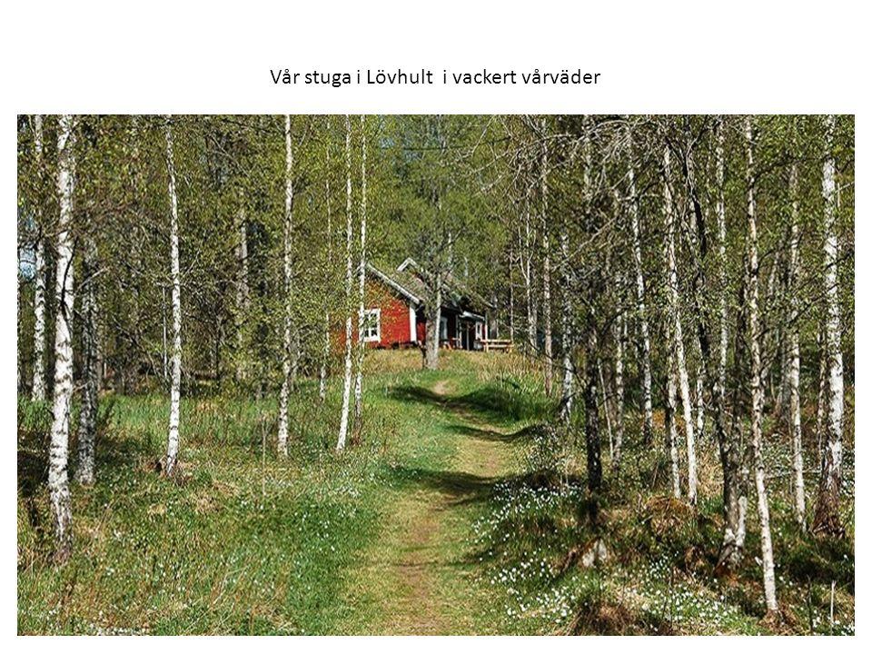 Skogsknytte är vår verksamhet för barn 3 – 4 år.