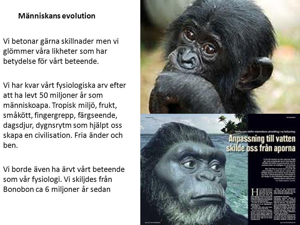 Människans evolution Vi betonar gärna skillnader men vi glömmer våra likheter som har betydelse för vårt beteende. Vi har kvar vårt fysiologiska arv e