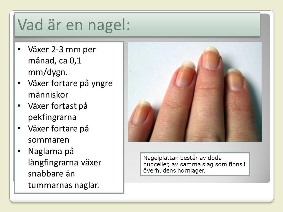 Vad är en nagel: Nagelplattan består av döda hudceller, av samma slag som finns i överhudens hornlager. Växer 2-3 mm per månad, ca 0,1 mm/dygn. Växer