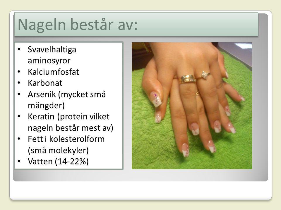 Nagels uppbyggnad 1.Nagelcellerna föds vid nagelroten, i Matrix.
