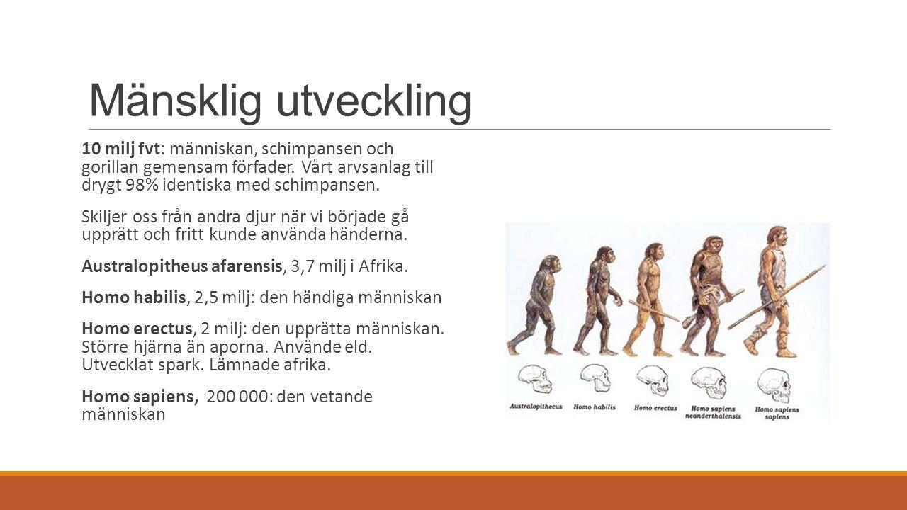 Mänsklig utveckling 10 milj fvt: människan, schimpansen och gorillan gemensam förfader. Vårt arvsanlag till drygt 98% identiska med schimpansen. Skilj