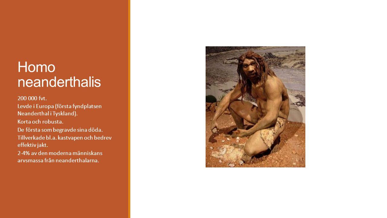 Homo neanderthalis 200 000 fvt. Levde i Europa (första fyndplatsen Neanderthal i Tyskland). Korta och robusta. De första som begravde sina döda. Tillv