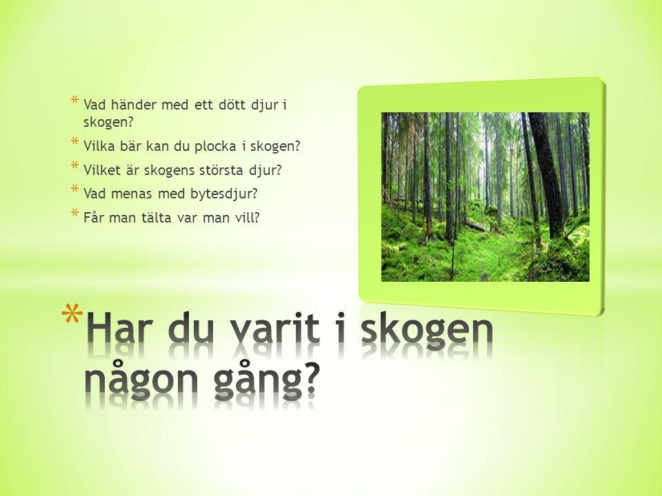 * Vad händer med ett dött djur i skogen? * Vilka bär kan du plocka i skogen? * Vilket är skogens största djur? * Vad menas med bytesdjur? * Får man tä