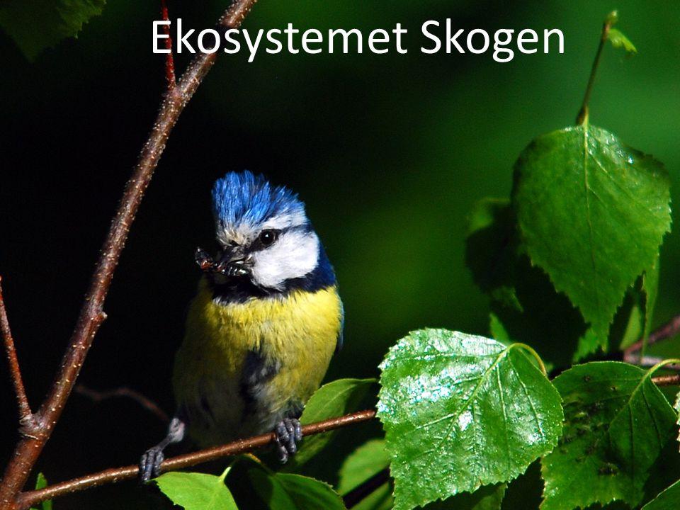 Ekosystem Ekosystemet Skogen