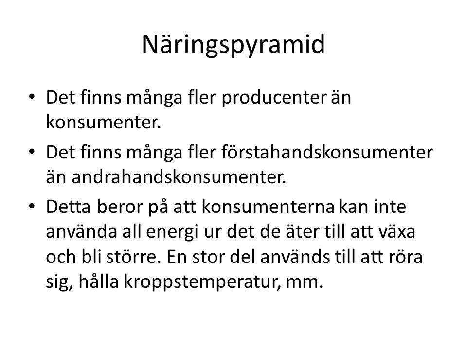 Näringspyramid Det finns många fler producenter än konsumenter.
