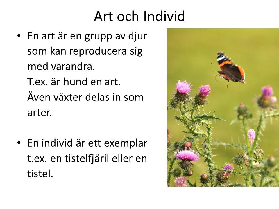 Art och Individ En art är en grupp av djur som kan reproducera sig med varandra. T.ex. är hund en art. Även växter delas in som arter. En individ är e