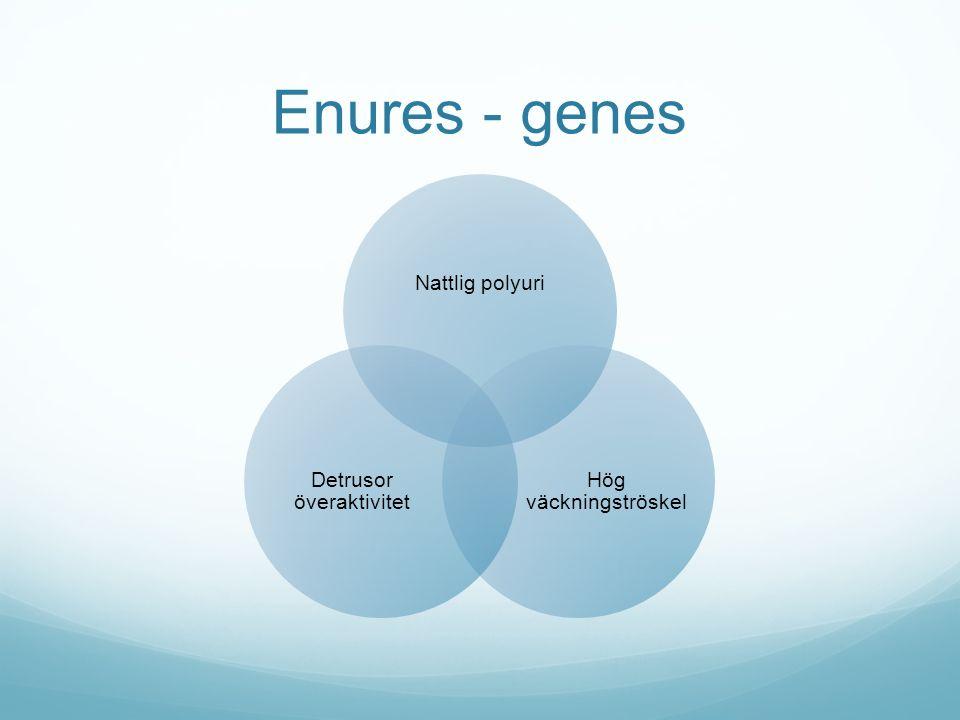 Enures - ärftlighet 1 förälder  ca 30 % av barnen drabbas 2 föräldrar  ca 50% av barnen drabbas Monocygote tvillingar  concordans 68% mot 36% hos dicygote