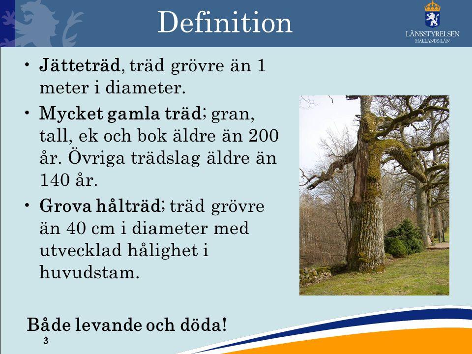 3 Definition Jätteträd, träd grövre än 1 meter i diameter.