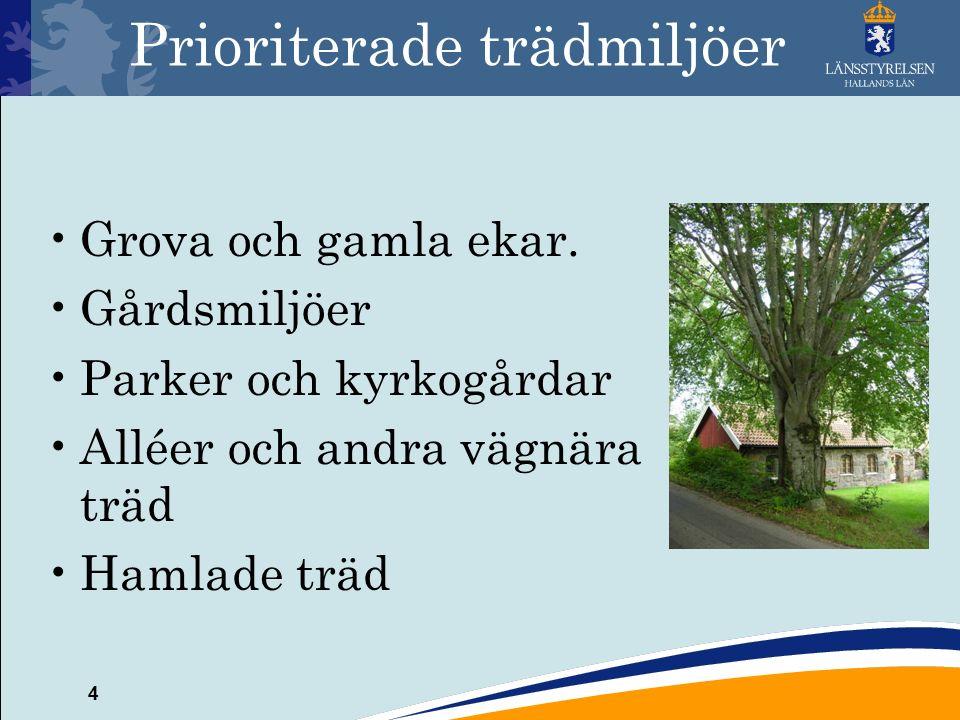 4 Prioriterade trädmiljöer Grova och gamla ekar.