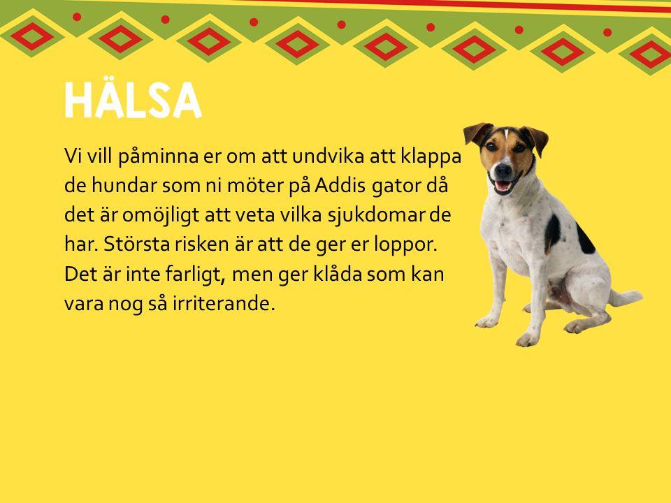Vi vill påminna er om att undvika att klappa de hundar som ni möter på Addis gator då det är omöjligt att veta vilka sjukdomar de har. Största risken