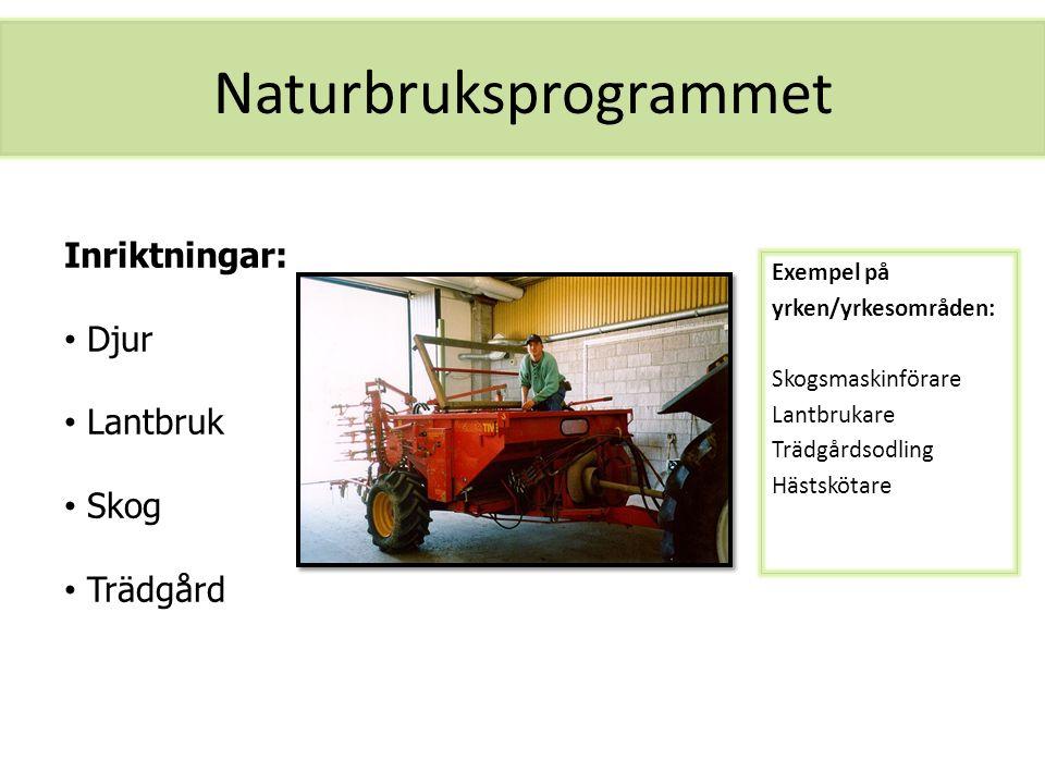 Naturbruksprogrammet Exempel på yrken/yrkesområden: Skogsmaskinförare Lantbrukare Trädgårdsodling Hästskötare Inriktningar: Djur Lantbruk Skog Trädgår