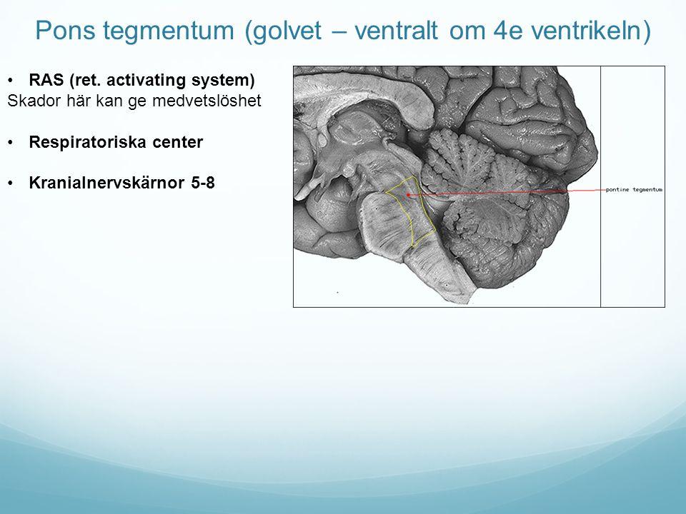 Pons tegmentum (golvet – ventralt om 4e ventrikeln) RAS (ret.