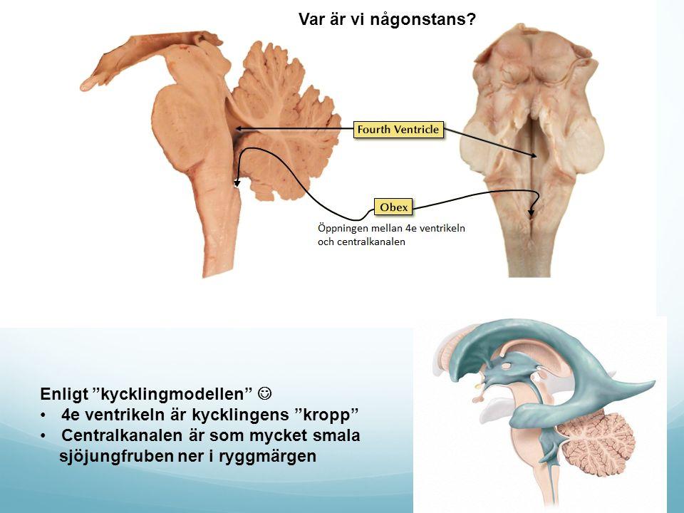 Chemoreceptor trigger zone) (Area postrema) Area postrema ligger behändigt nog precis intill s.k Nucleus Solitarius som via CN 7, 9 och 10 tar emot afferens från tarm, mun och luftvägar.