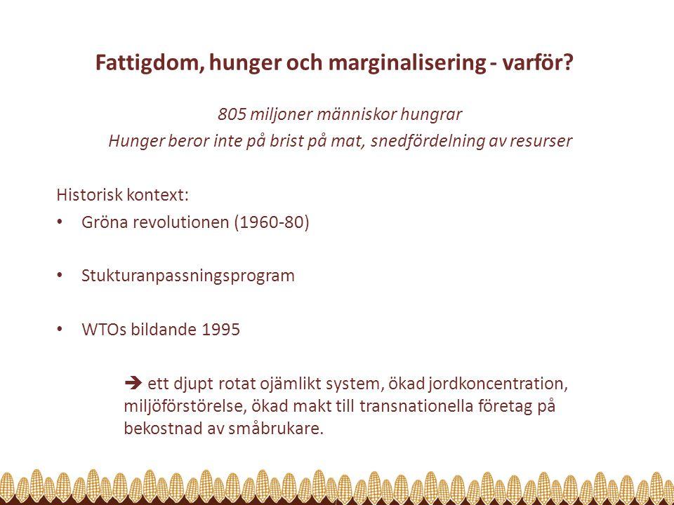 Fattigdom, hunger och marginalisering - varför? 805 miljoner människor hungrar Hunger beror inte på brist på mat, snedfördelning av resurser Historisk