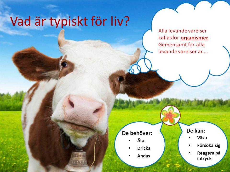 Alla levande varelser kallas för organismer. Gemensamt för alla levande varelser är.... Äta Dricka Andas De behöver: Växa Försöka sig Reagera på intry