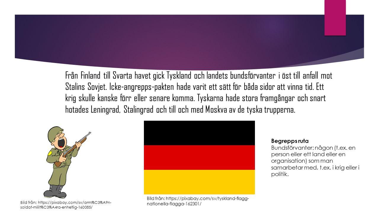 Från Finland till Svarta havet gick Tyskland och landets bundsförvanter i öst till anfall mot Stalins Sovjet. Icke-angrepps-pakten hade varit ett sätt