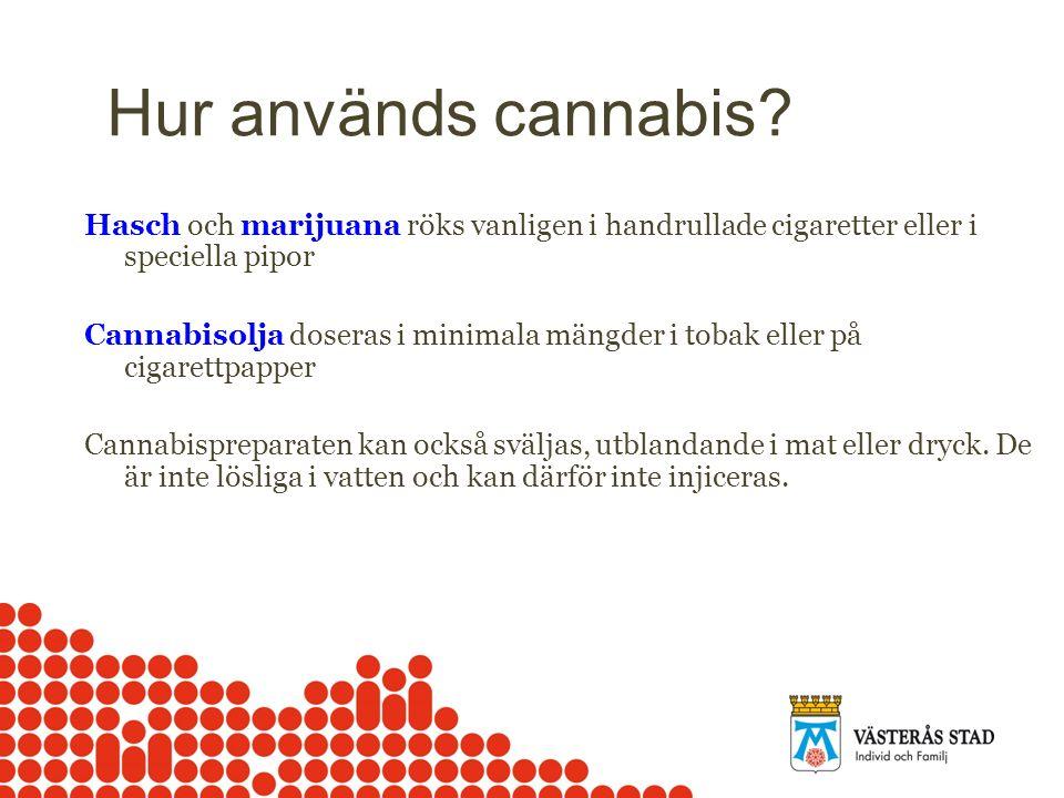 Hur används cannabis? Hasch och marijuana röks vanligen i handrullade cigaretter eller i speciella pipor Cannabisolja doseras i minimala mängder i tob